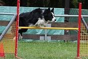 Viele Border Collies brillieren auch im Agility-Parcours, dennoch kann Hundesport die Arbeit am Vieh in der Regel nicht ersetzen.