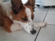 Hunde 013
