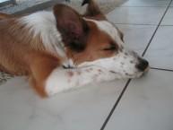 Hunde 015